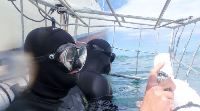 Chciałbyś nurkować z rekinami ?